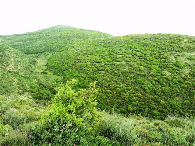 """إدارةمجلس محلي كوكب أبو الهيجا تنجح في مواجهة """"محمية جبل عتسمون"""" لضمان حقّ البلدة بالتوسع والتطور في المستقبل"""